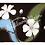 Thumbnail: Wild Flowers' Color