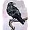 Thumbnail: Watercolor Raven