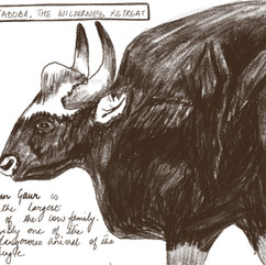 The Indian Gaur