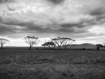 Kenia, Masái Mara 2019