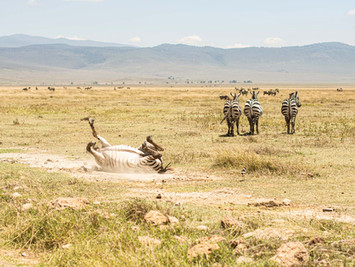 Tanzania, Ngorongoro 2019