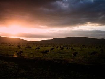 Tanzania, Migración Ngorongoro 2019