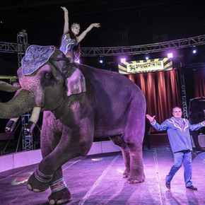 """Bo"", The All American Elephant"