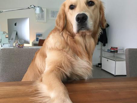 Immer im Büro mit tierischer Unterstützung