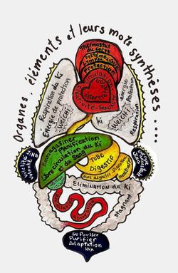 Les organes et leurs fonctions
