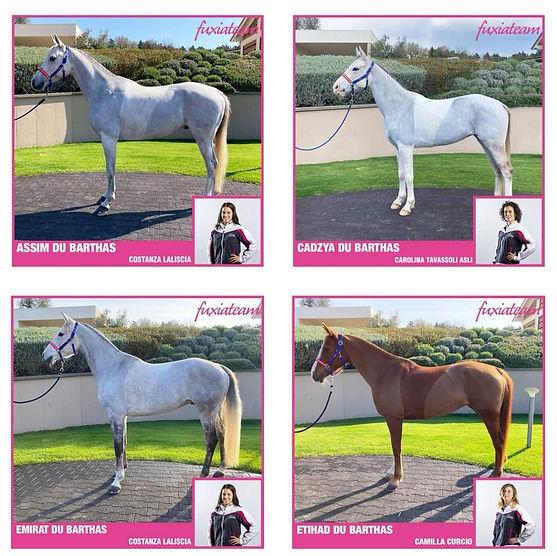 4 chevaux.jpg