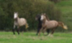 Nos chevaux de 4 ans à vendre