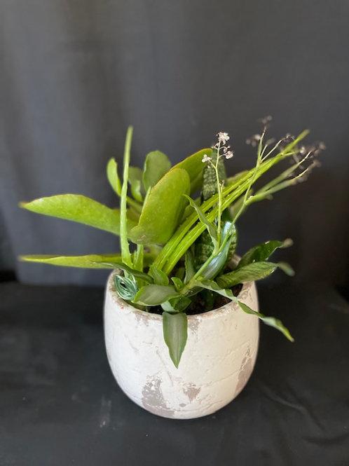 Rustic Succulent