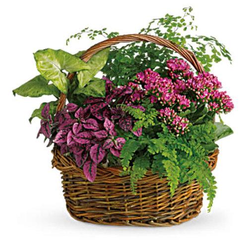 COLOURFUL PLANT BASKET