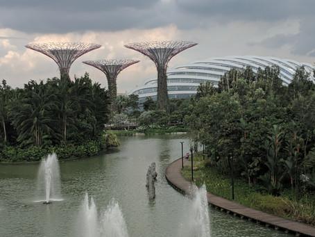 Singapore--For the Birds