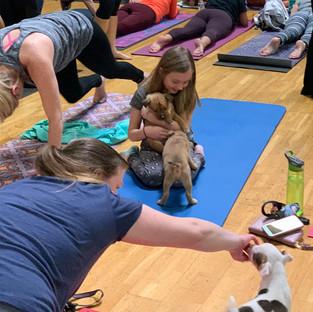 Puppy-Yoga-31.jpg