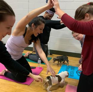 Puppy-Yoga-37.jpg