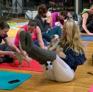 Puppy-Yoga-19.jpg
