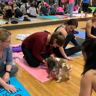 Puppy-Yoga-35.jpg