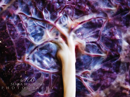 The Power of the Placenta - A Look into Placenta Encapsulation