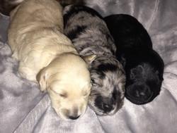 Charlee, Stella, Sparky