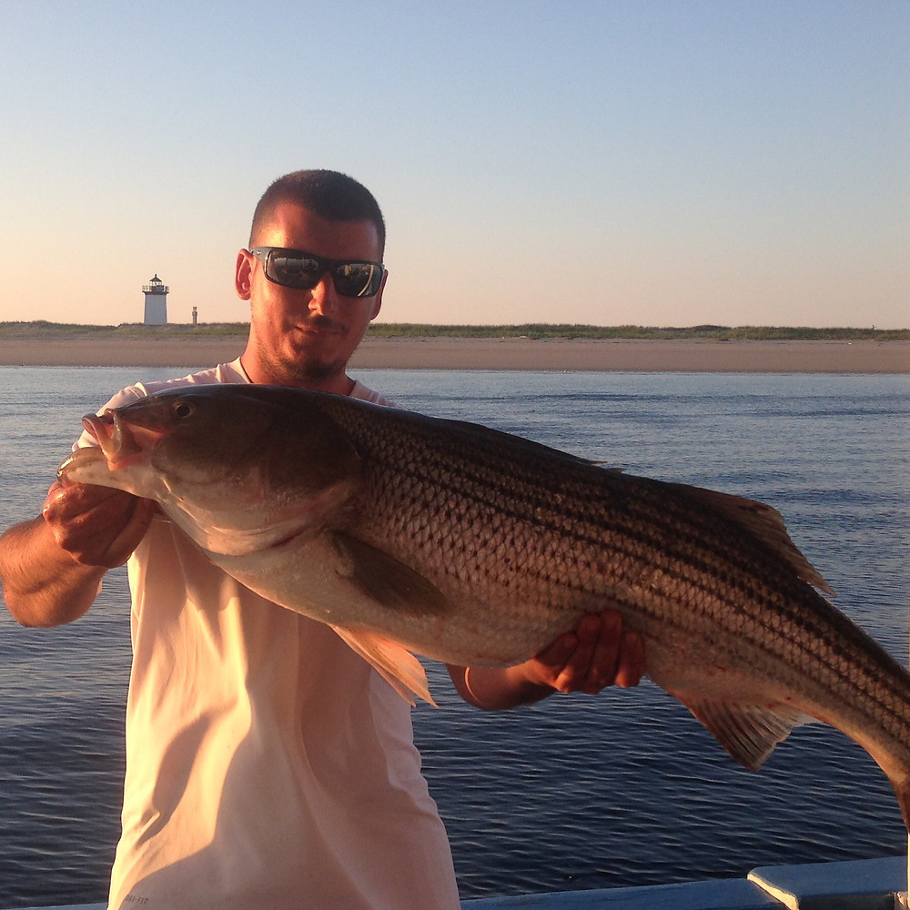 Captain Nico with a striped bass at sunset