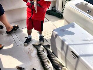 AM Bass & Squid