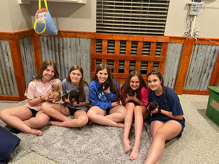 puppygirls.jpg