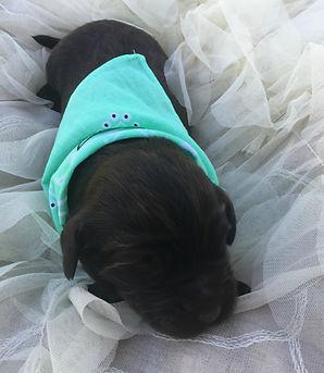 green pup sleep.jpg