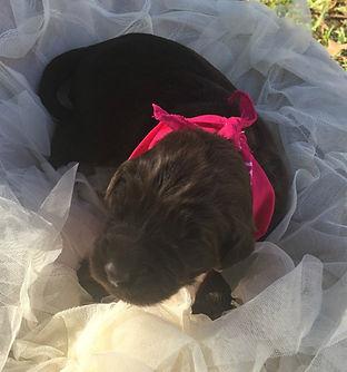 hot pink puppy.jpg