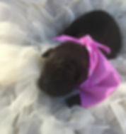 pink puppy.jpg