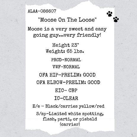 moose stud info.jpg