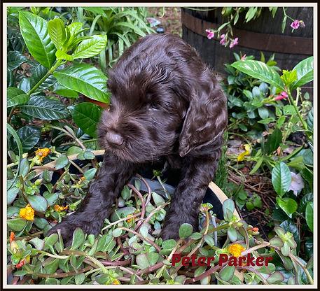 puppyredjune6picmon.jpg
