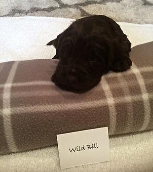 WILD BILL REDO.jpg