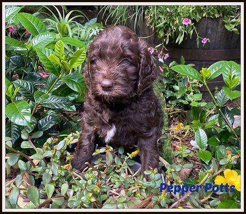 puppygreenjune6picmon.jpg