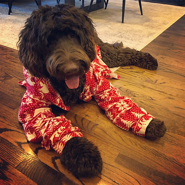 Moose Christmas.JPG