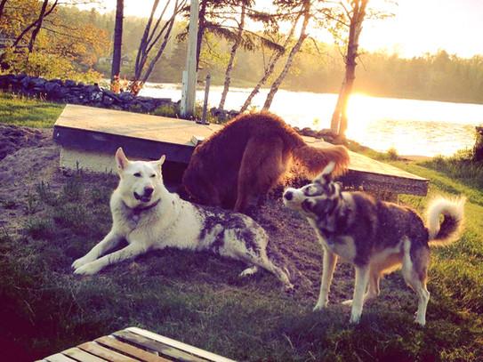 the dogs in Rodney Habib's life