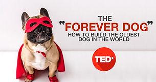 Rodney Habib TEDX MEXICO.jpg