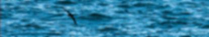bannerbird01.jpg