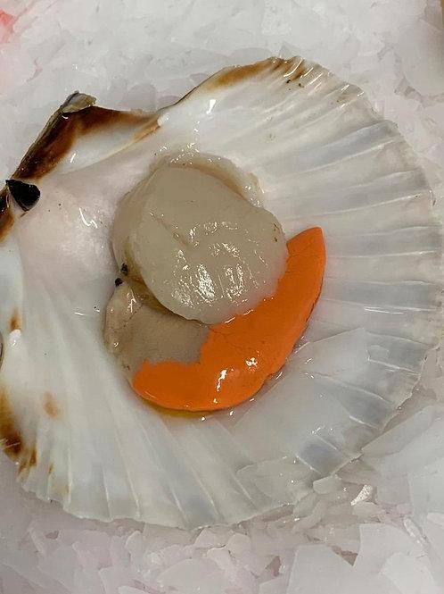 Rye Bay Scallop in Shell