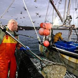 fisherman collecting fish