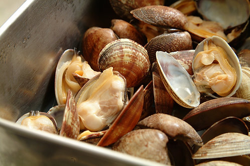 Palourde Clams