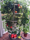 Tomato Tower Garden.jpg