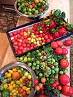 Fresh Vegetables that can be grown in a