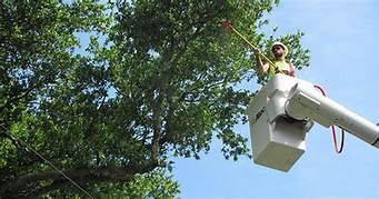 Tree / Shrub Pruning & Trimming
