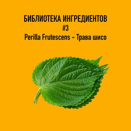 Perilla Frutescen