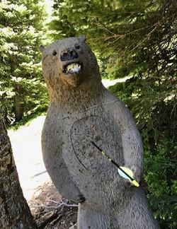 bear target