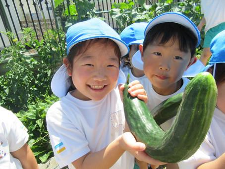 あさがお&野菜畑