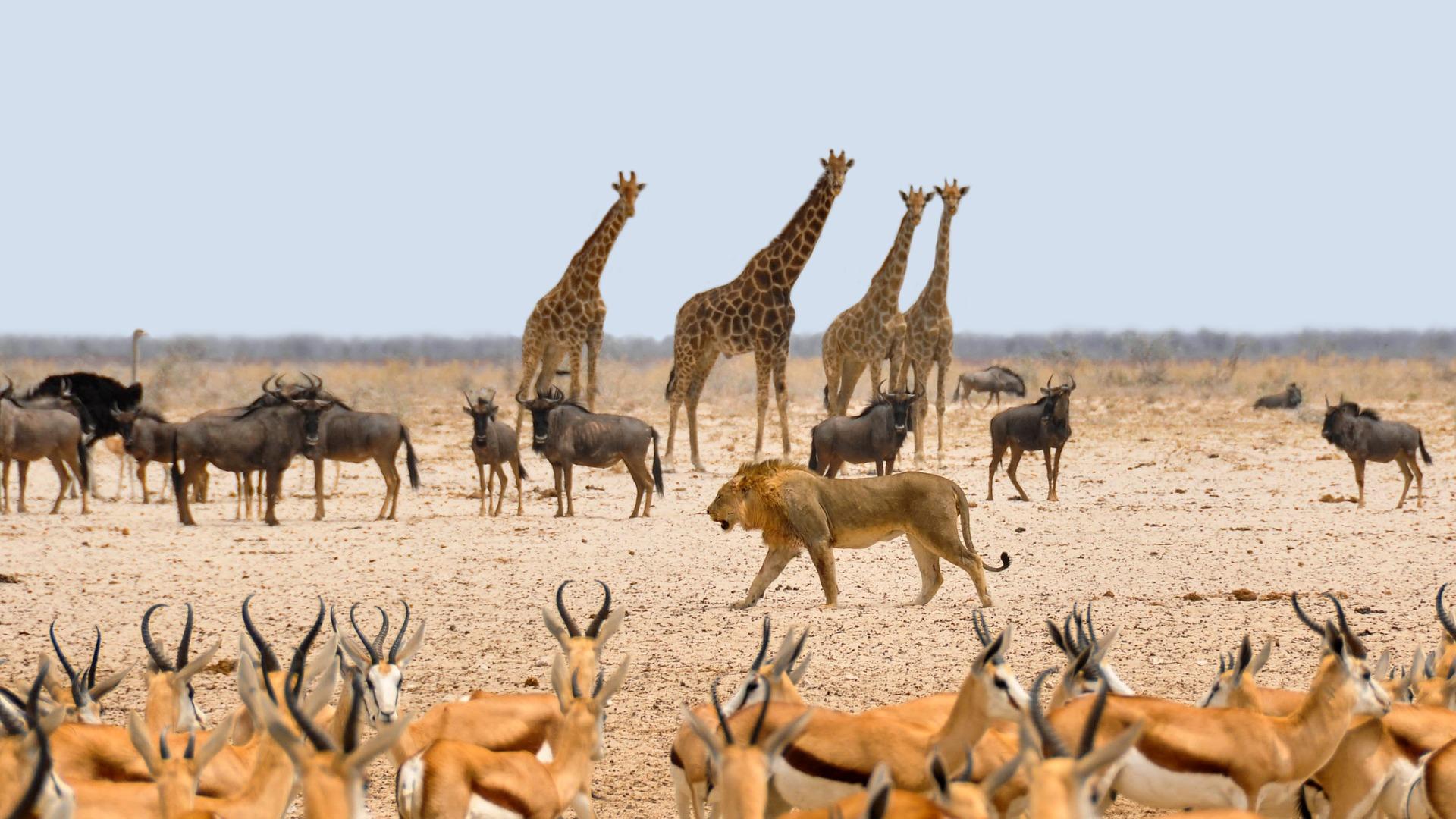 4. Namibia