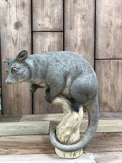 Possum on a branch