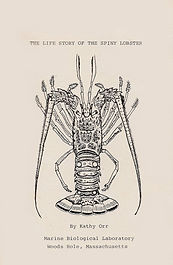 life-story-lobster-front-cover.jpeg