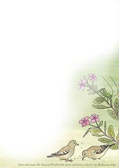notecard.ground.doves_vert1.jpg