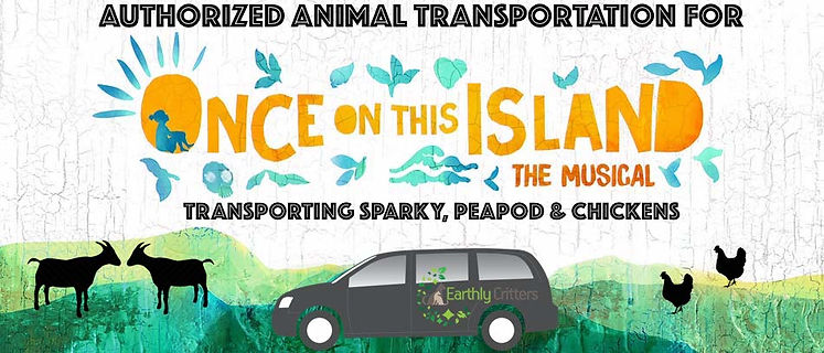 Pet Taxi NYC Animal Transportation