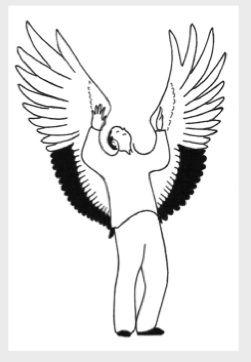 crane-flaps-wings-art.jpg
