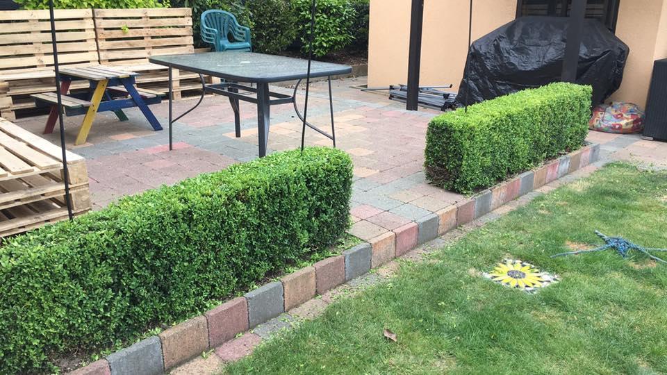 Freshly cut hedge